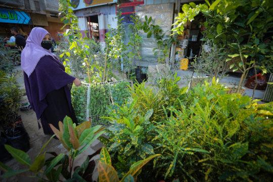 Mrs. Najah at the gardening shop