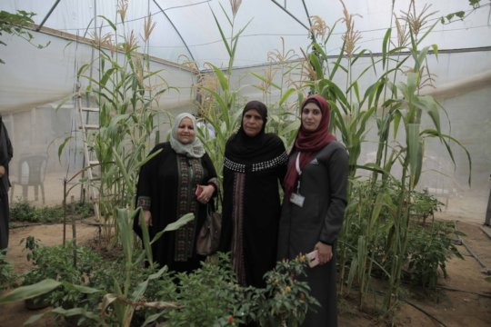 The owner of the garden (center) shows us her crop