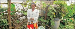 A Community Facilitator's Household Food Garden