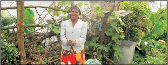 Develop sustainable farming in rural South Africa