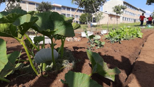 Vegetable garden planted after cleanup