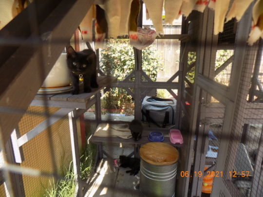 our new cattery