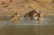 Water for Bandhavgarh's Tiger Protectors