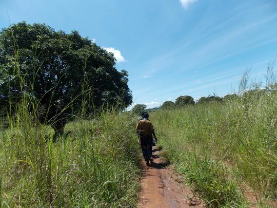 Long walk to the garden