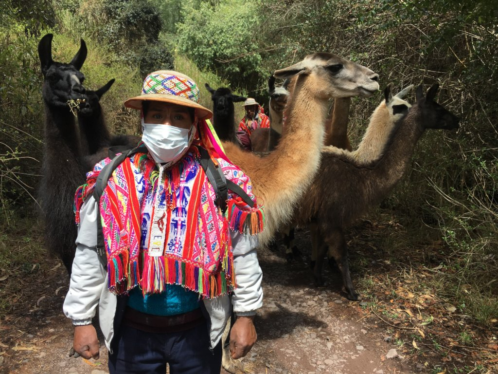 Rufino in front of llamas to mark their pace.