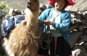 Help 85+ llama farmers in Peru access fair work