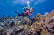 Rebuild Coral Reefs With Nanoscience