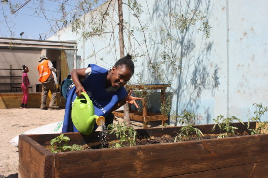 Help 350 families grow food to overcome COVID-19