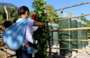 Spirulina farm for 50 malnourished tenek families