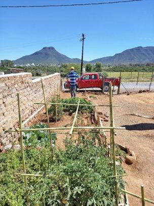 Koos' is getting bumper crops from adaptive garden