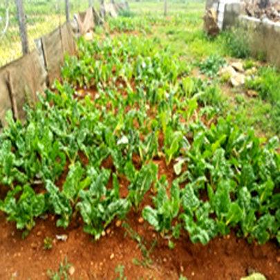 Petrus' garden is generating income