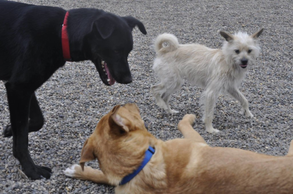 Buckley playing with his friends at Project POOCH