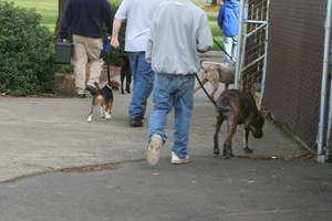Daily Dog Walks