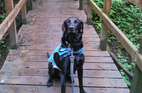 Superhero Fenway on one of many hikes with his mom