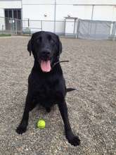 Jet, having a ball at Project POOCH!