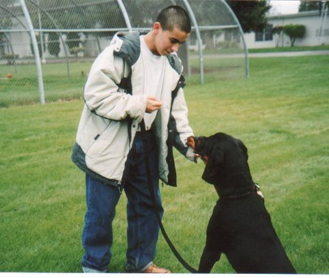 Hunter learning obedience