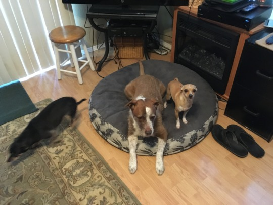 Peanut, Corey and Bentley