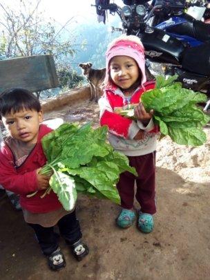 Harvest vegetables from the family garden