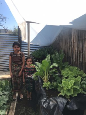 Grow vegetable gardens for Guatemalan families