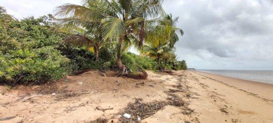 Plastic pollution of sea turtle nesting beach