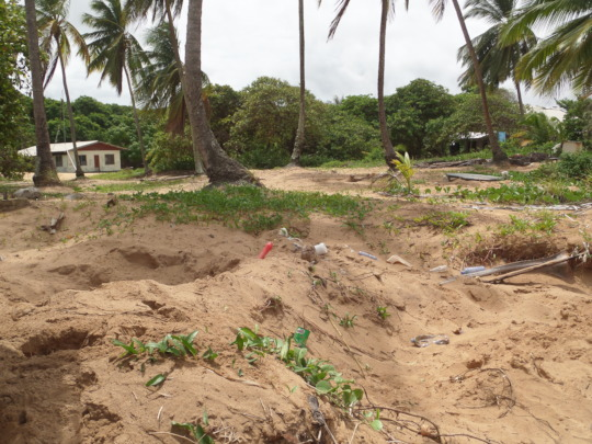 Several sea turtle nests with plastic around