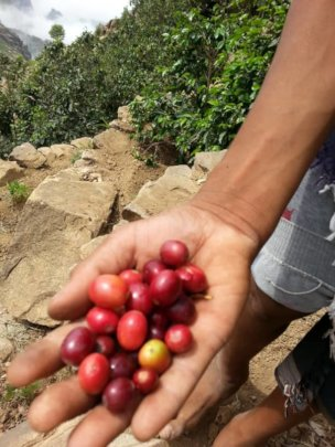 coffee product of farm supported by the project