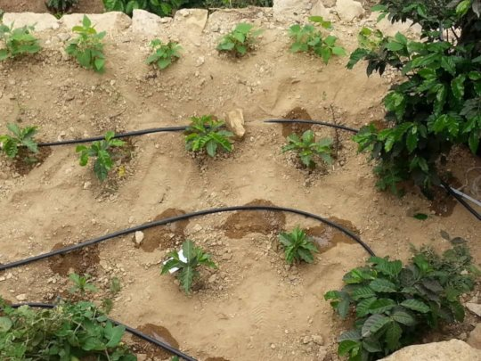 Irrigation system implemented by the project