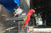 Wildlife trade study in Indonesia during COVID-19