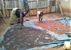 Evas and her granddaughter drying coffee beans