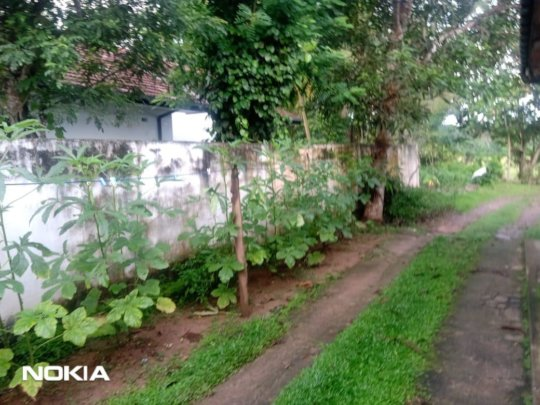 Sustainable Gardens for the local community