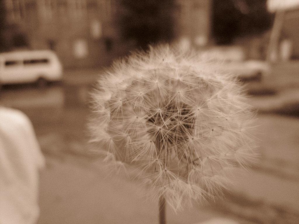 Peace Through Photography