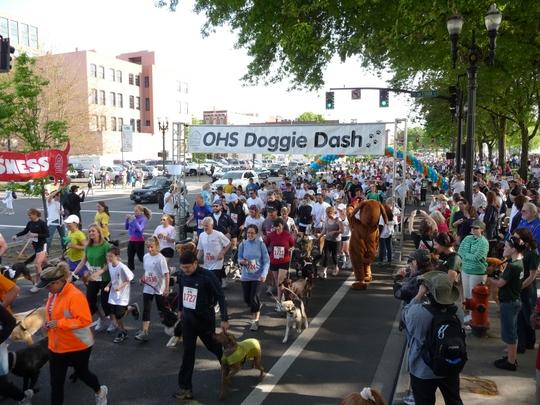 2010 Doggie Dash