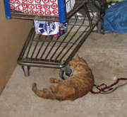 Milagro found starving in Feb.