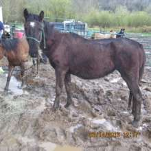 Horses seized from a rural property in Clatskanie.