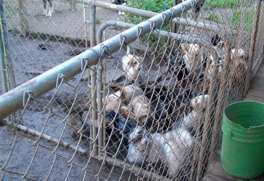 Oregon Humane Society's End Petlessness Campaign
