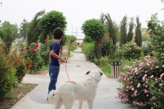 Animal assistants help build confidence.