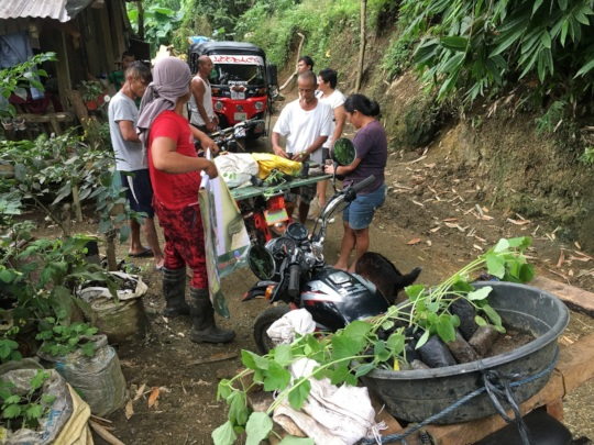 Delivery of healthy seedlings