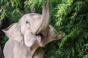 0 elephants poached since 2006!