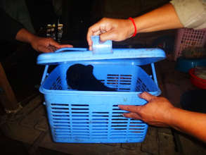Sun bear cub found in blue box