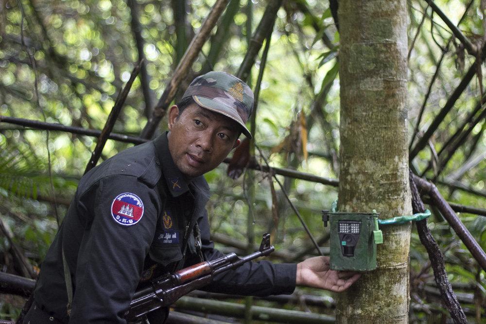 Ranger sets a camera trap.
