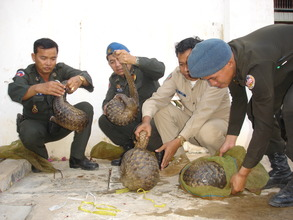 Pangolins rescued from a trader