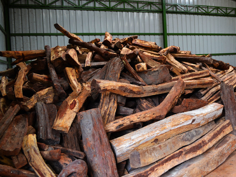 Confiscated wood at the ranger station