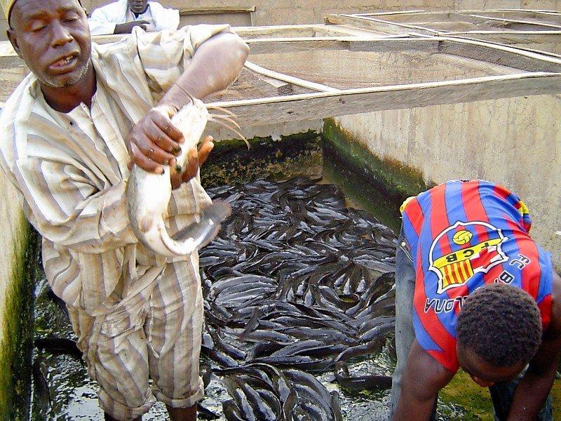 Fish Farm Overflowing