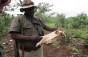 Support 340 Wildlife Rangers in Zimbabwe