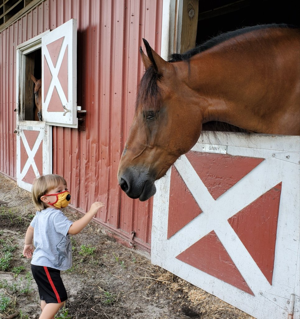 Horse Heroes Help Individuals with Special Needs