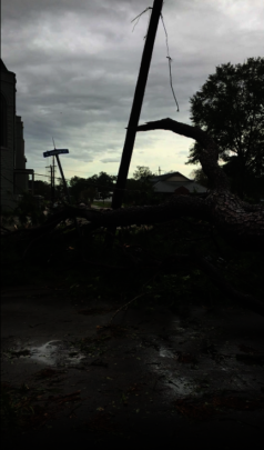 Large trees uprooted and powerlines snapped