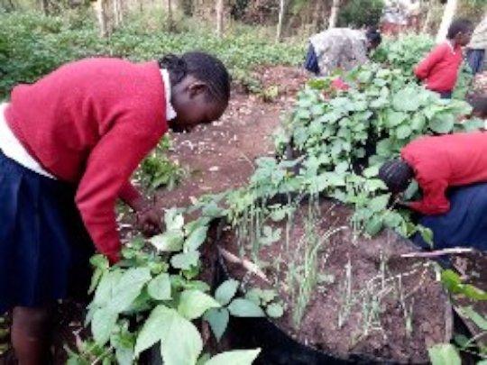 Girls working on their multistory gardens
