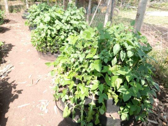 akili school farm
