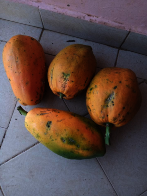 Papaya from Akili school farm