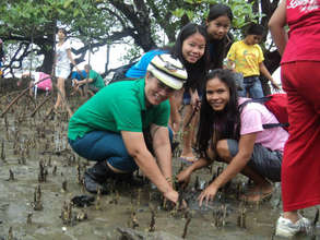 Saving the mangrove area is one way to save